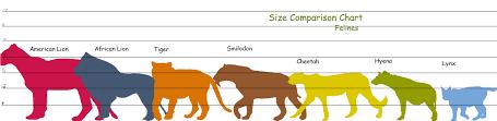 Cat Height Chart Feline Height Comparison Chart American Lion Sand Cat Hyena