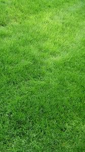 grass field texture. Texture Grass Field Green #iPhone #6 #wallpaper