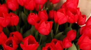 15 best red flowering plants for