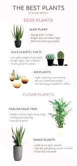 small plants for office. Best Small Plants For Office A