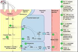 Electrolyte Relationships Chart Electrolyte Fluid Balance