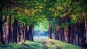 Earth, Nature Wallpapers HD / Desktop ...