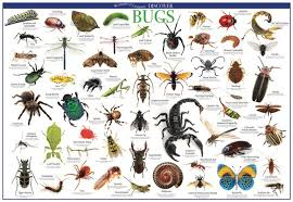 Discover Bugs Educational Wall Chart