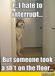 Image result for dog poo funny