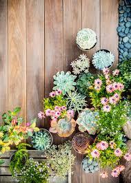 Wonderful Design Succulent Container Garden Stylish Decoration Succulent Container Garden Plans