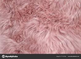 pink sheepskin rug background sheep fur wool texture stock photo