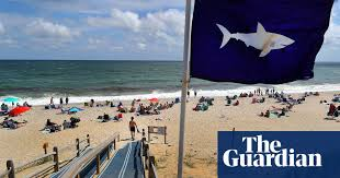 Cape Cod issues great <b>white shark</b> warning ahead of 4 July holiday ...