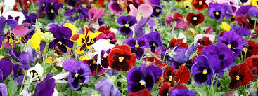 at dan west garden center we offer more than 1000 species of plants and flowers throughout the course of a season our plants are purchased from licensed