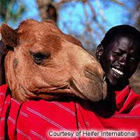 living gifts heifer international