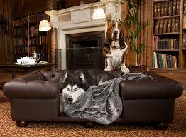 fancy pet furniture. accessories fancy pet furniture