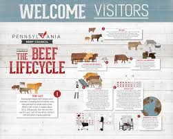 Cow Weight Chart Beef Lifecycle
