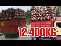 Hasil gambar untuk truk pengangkat sawit