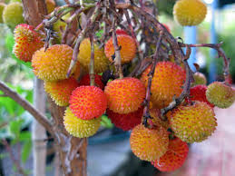 Small Orange Fruits  UR Free ImagesSmall Orange Fruit On Tree