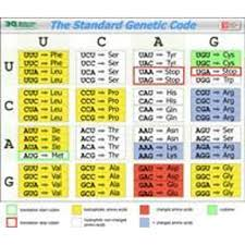 Genetic Codon Wall Chart