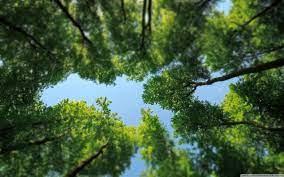 Tree Tops Ultra HD Desktop Background ...