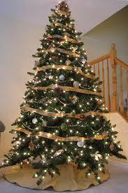 Christmas Tree Cats!