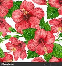 hibiscus flowers hibiscus flowers watercolor pattern stock photo katerinamk
