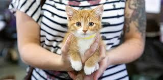 animal shelter kittens. Brilliant Shelter Orange Tabby Baby Kitten Adopt A Pet Like This Sweet Kitten From Shelter  Near In Animal Shelter Kittens B