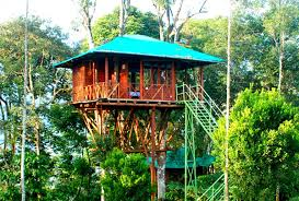 Dream Catcher Kerala Mesmerizing Best Tree Houses In Kerala