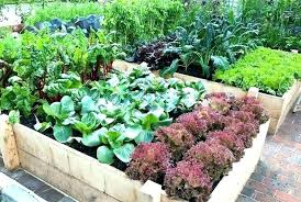 raised garden bed kits costco canada layout ideas fabulous vegetable