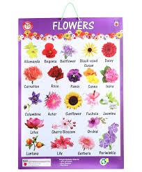 awesome stock of all kinds of flowers with pictures and names chart with names