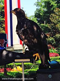 hawks at busch gardens williamsburg