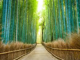 25 Most <b>Beautiful</b> Places in <b>Japan</b> - Condé Nast Traveler