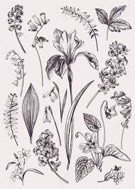 Set With Spring Flowers Vintage Botanical Illustration Vector