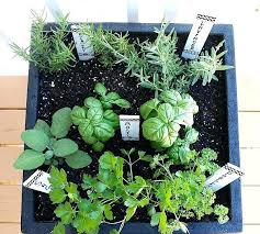 indoor herb garden planters. Herb Garden Potted Tips For Plant A Container Indoor Planters