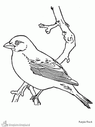 Coloring Pages Robin Tree