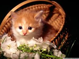 cute kittens wallpapers for mobile. Wonderful For Standard  And Cute Kittens Wallpapers For Mobile L