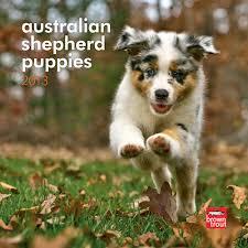 Australian Shepherd Puppies 2013 Mini Wall Calendar | Australian Shepherds | DogBreedStore.com - 201300004564