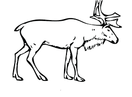 Christmas Reindeer Coloring Pages Reindeer Coloring Pages For Kids