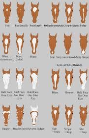 Pin von Ivy Carpenter auf Horse Coat Patterns | Pferde, Pferde rassen,  Indianer pferde