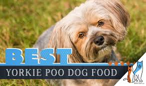 Lhasa Apso Diet Chart 6 Best Yorkie Poo Dog Foods Plus Top Brands For Puppies