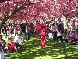 sakura matsuri brooklyn botanic garden