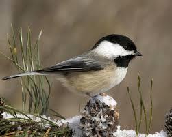 48+] Widescreen Winter Bird Wallpaper ...
