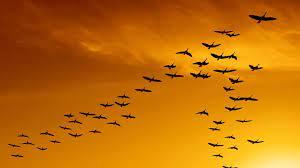 Escritoras en la FIL: Mariana Oliver y Aves migratorias - Este País
