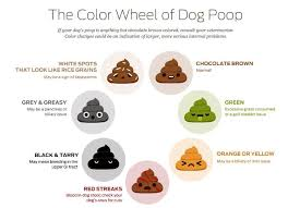 Cat Stool Chart Pin On For Pawrents