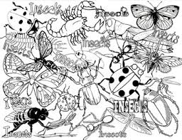 Hand drawn ornamental butterfly outline illustration with decorative. Insects Or Bugs Coloring Page By Champagnewisdom Tpt