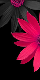 Cute Wallpapers For Mobile Zedge 8+ ...