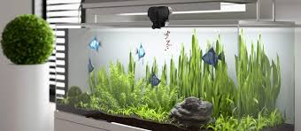 best automatic fish feeder