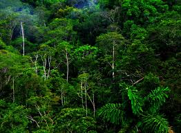 tropical rainforest trees