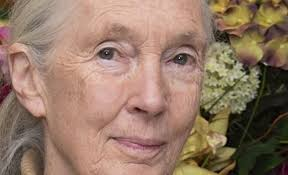 Jane Goodall Quotes Gorgeous 48 Best Jane Goodall Quotes Quote Catalog