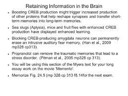 retaining information in the brain explicit memories are language 5 retaining information