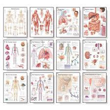 Body Systems Chart Body Systems Chart Set