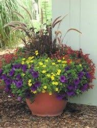 Small Picture 51 best full sun containers images on Pinterest Garden container