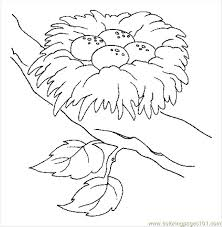 Small Picture 9 best Birds images on Pinterest Coloring pages Drawings and Hawks