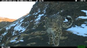 Fundraising for Snow Leopard Trust