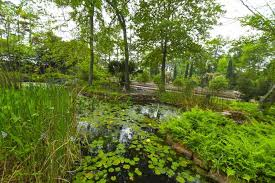mercer botanic gardens reopened to the public in march after being flooded during hurricane harvey and